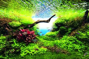 チラシ用水景2.jpg