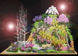orchiddisplay.jpg